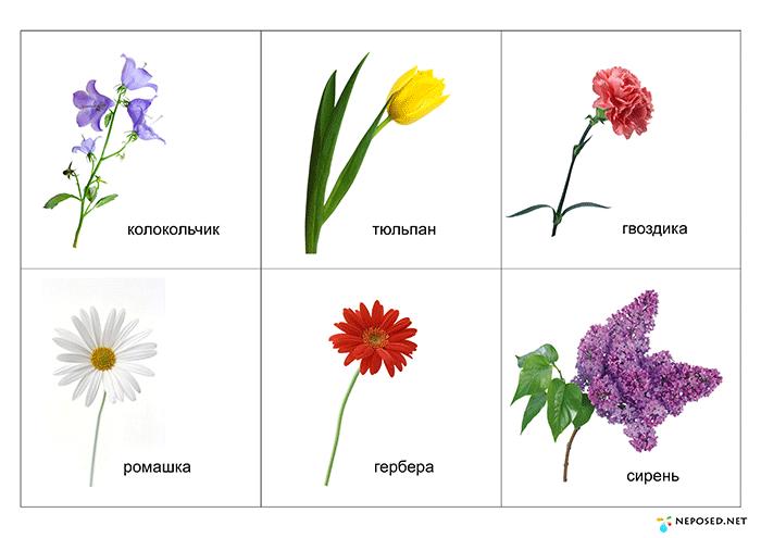Виды цветов картинка для детей