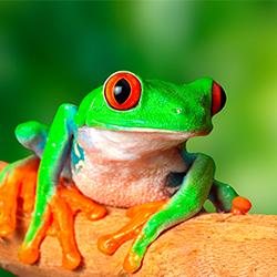 детские стихи про змею, крокодила, лягушку, ящерицу, жабу