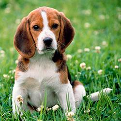 детские стихи про домашних животных