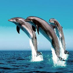 детские стихи про морских животных