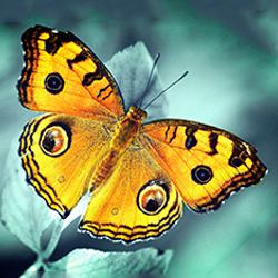 детские стихи про насекомых, улитку