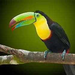 детские стихи про птиц Земли