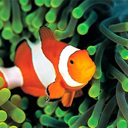 детские стихи про рыб