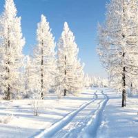 Картинки к зиме и загадки со звуком
