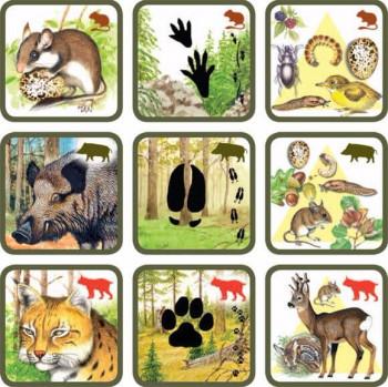 игра следы животных питание
